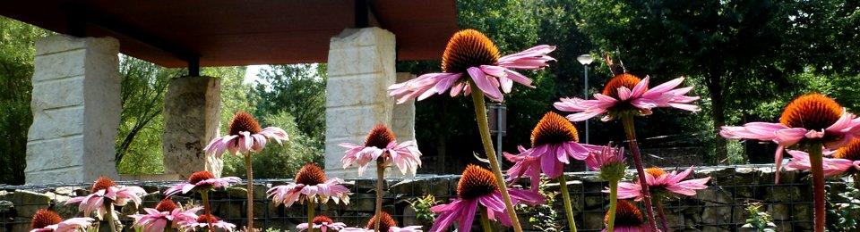 Kurpark mit Kneippanlage und Garten den Sinne