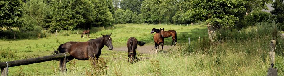 Reiten im Holsteiner Auenland